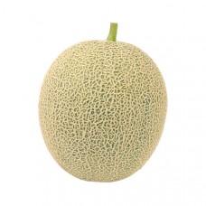 Cantaloupe(musk melon)